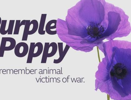 Purple Poppy Appeal 2020 - Monday 8th June at 8pm